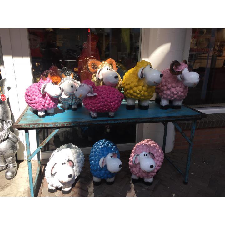 schaap, schaap, schafe, sheep, schaap wol